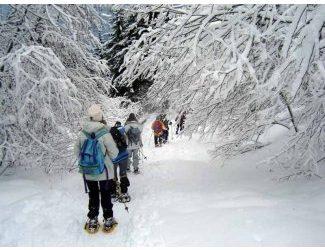 Raquette à neige les Cotilles autour de Courchevel
